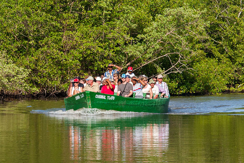 Birdwatchers at the Caroni Swamp