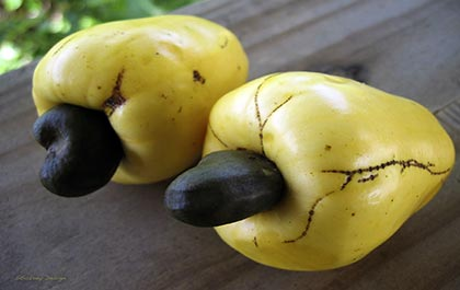 Yellow cashews