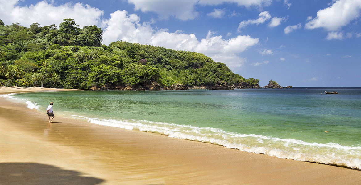 Rainforest beach along the Caribbean coast of Tobago